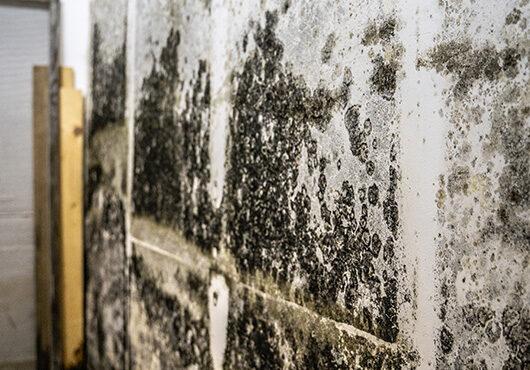 Mold on Wall Indoors